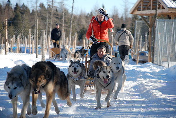 Dog sledding, Quebec city dog sled rides